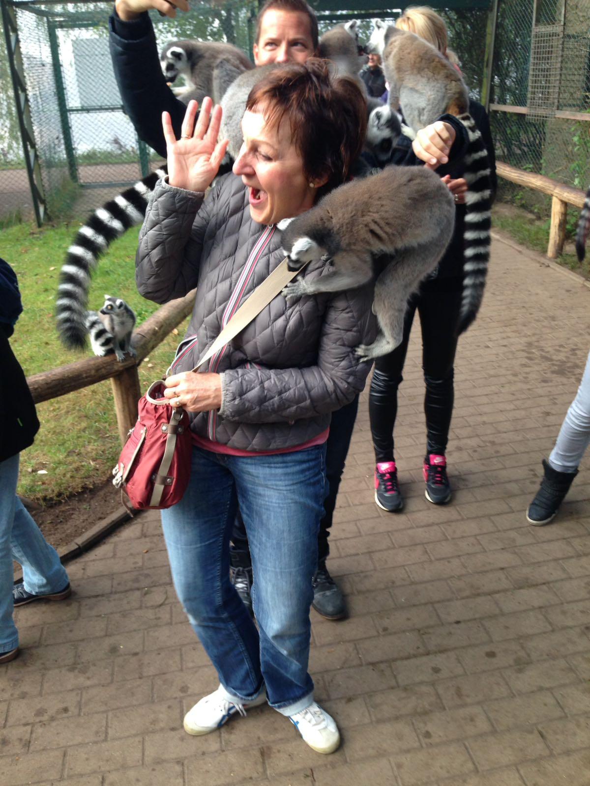 """alt=""""Frau im Affengehege im Serengeti-Park, auf der einige Katta-Affen sitzen"""""""