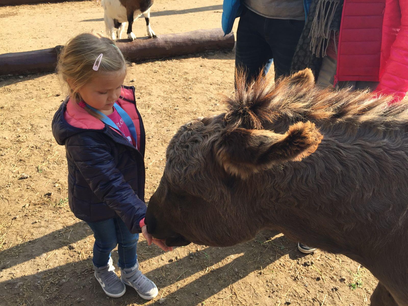 """alt=""""Kind füttert einen Esel im Serengeti-Park"""""""
