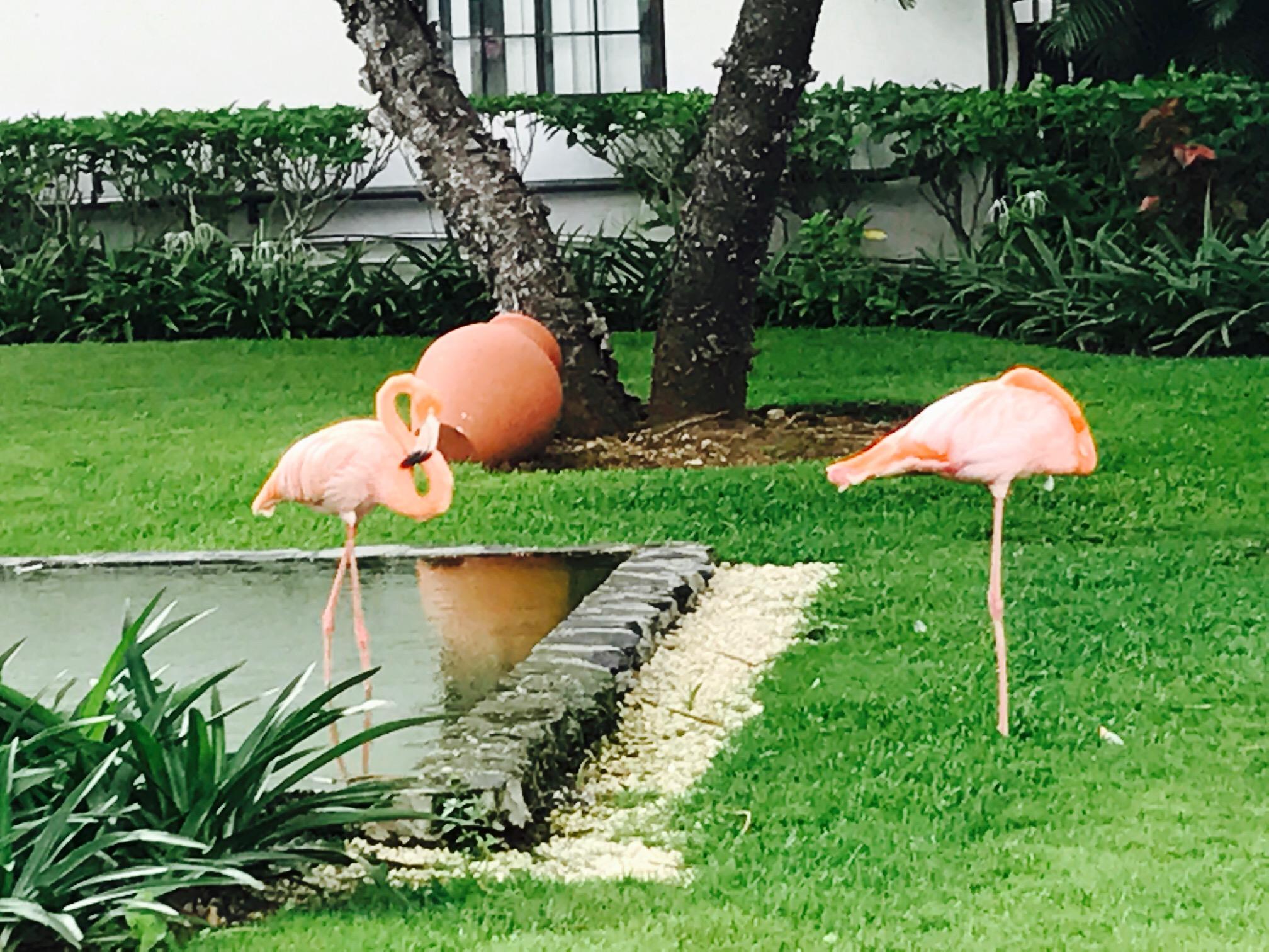 Flamingos im Dreams La Romana am Bayahibe Strand in der Dominikanischen Republik