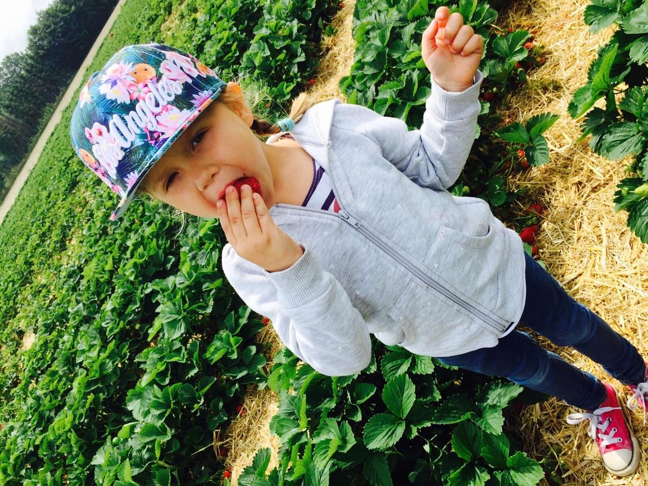 Kind beim Erdbeeren essen im Erdbeerfeld beim Floreana Landmarkt in Wadersloh bei Bad Waldliesborn