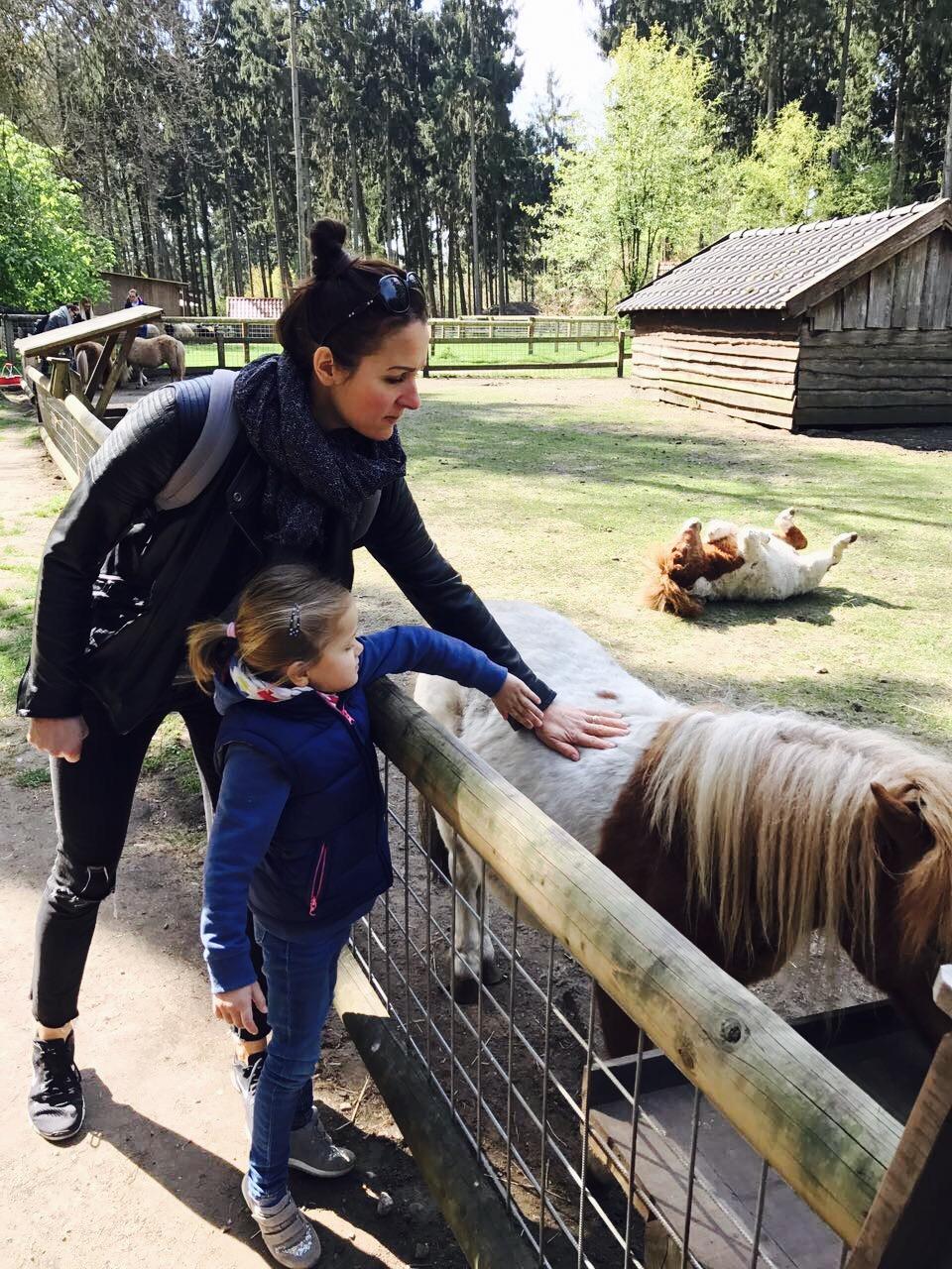 Ponys streicheln im Wildpark Frankenhof, Reken