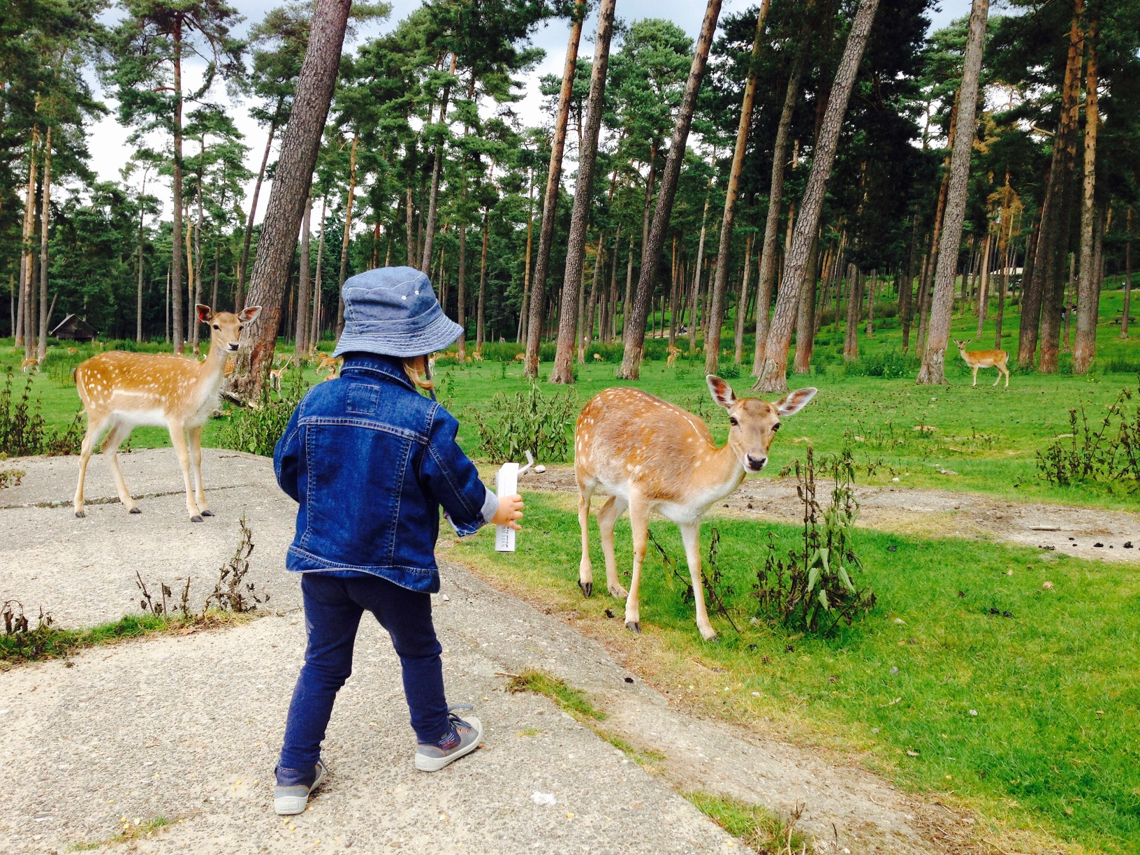 Rehe füttern im Naturwildpark Granat in Haltern
