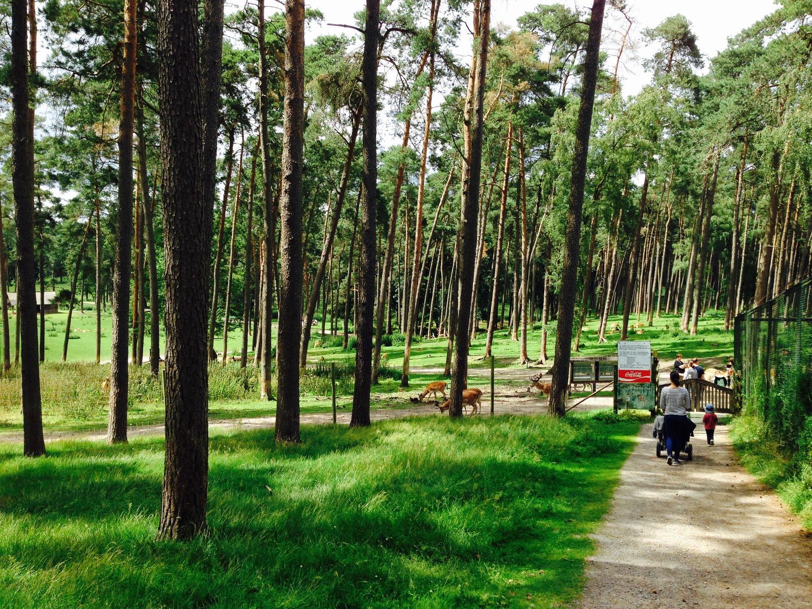 Ausflugstipps NRWm Wald im Wildpark Granat, Haltern