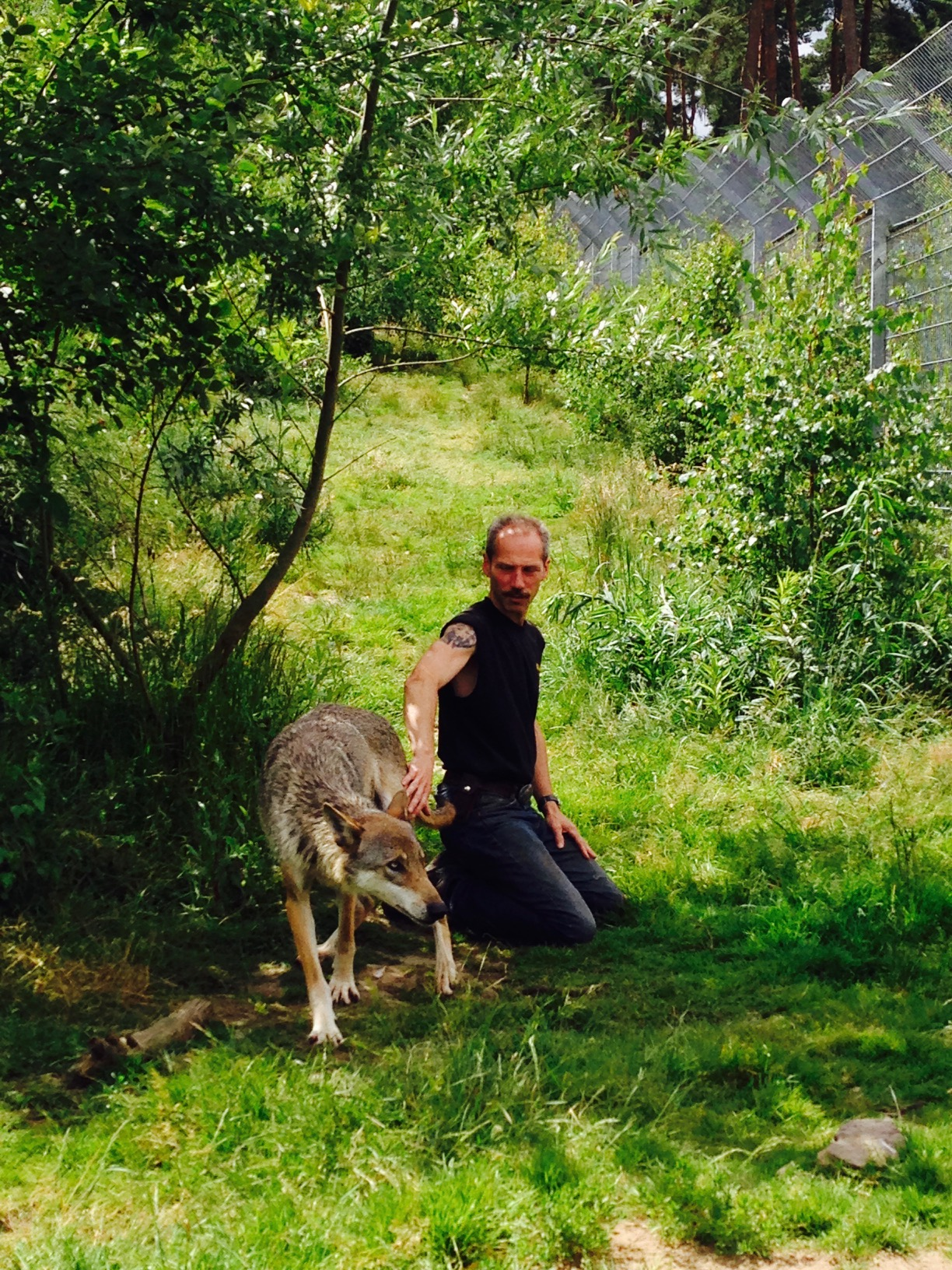 Wolf im Naturwildpark Granat, Haltern