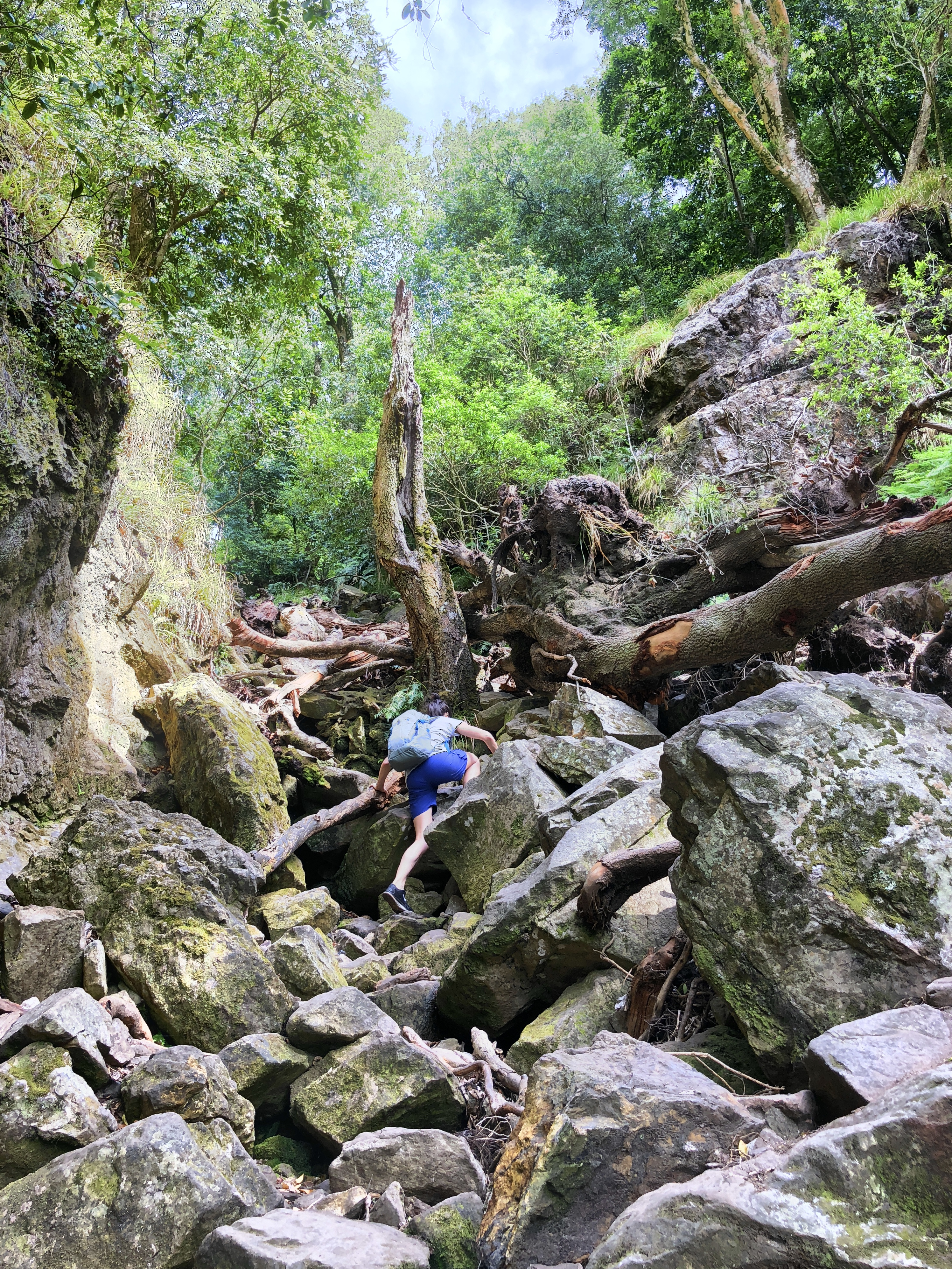 Blick auf den Skeleton Gorge Trail, Tafelberg