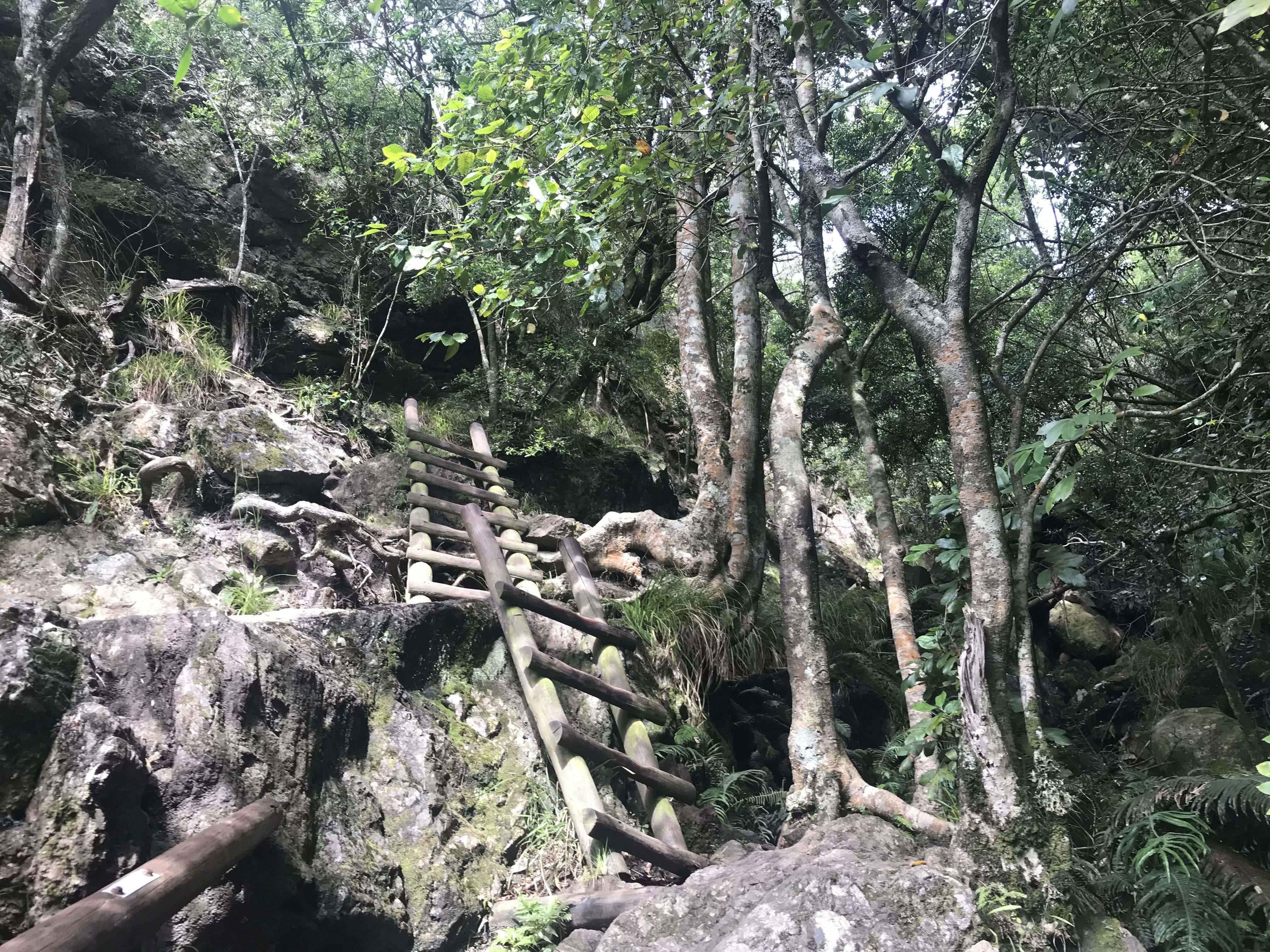 Blick auf einen Teil des Aufstiegs zum Tafelberg, Skeleton Gorge