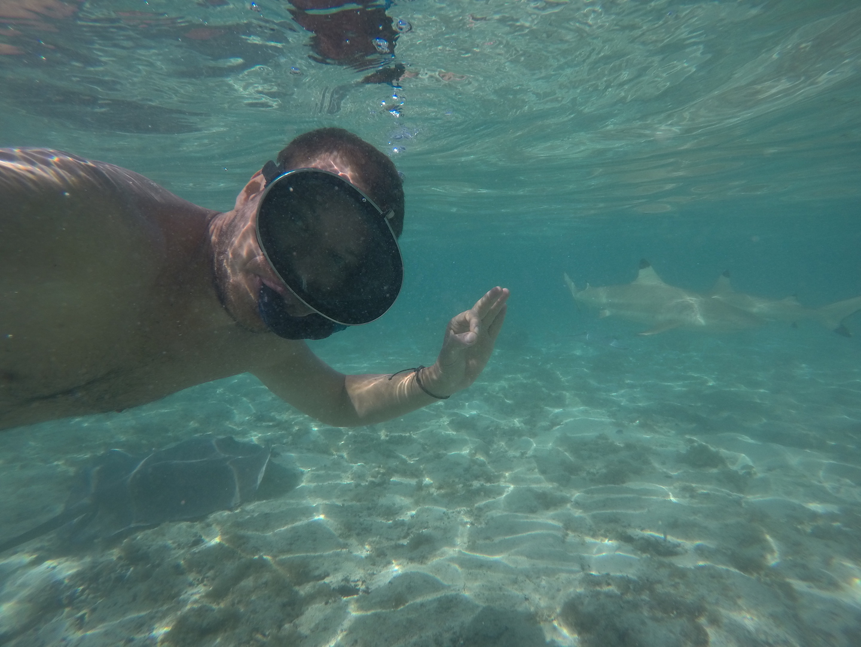 Tobias schwimmt mit Haien, Bora Bora