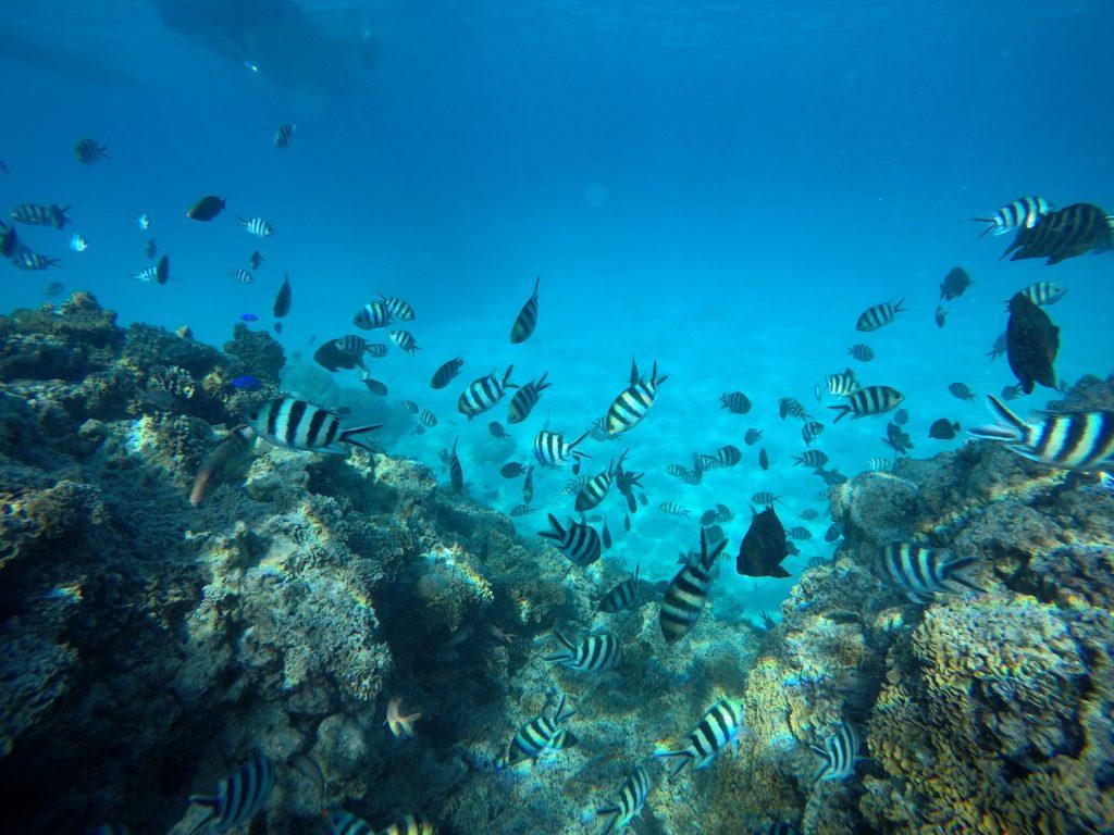 Korallenriff Bora Bora