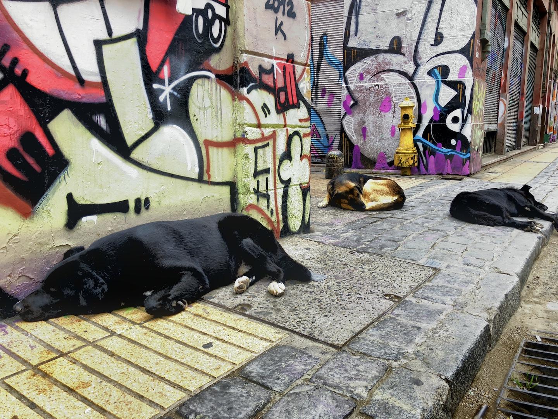Hunde in Valparaiso