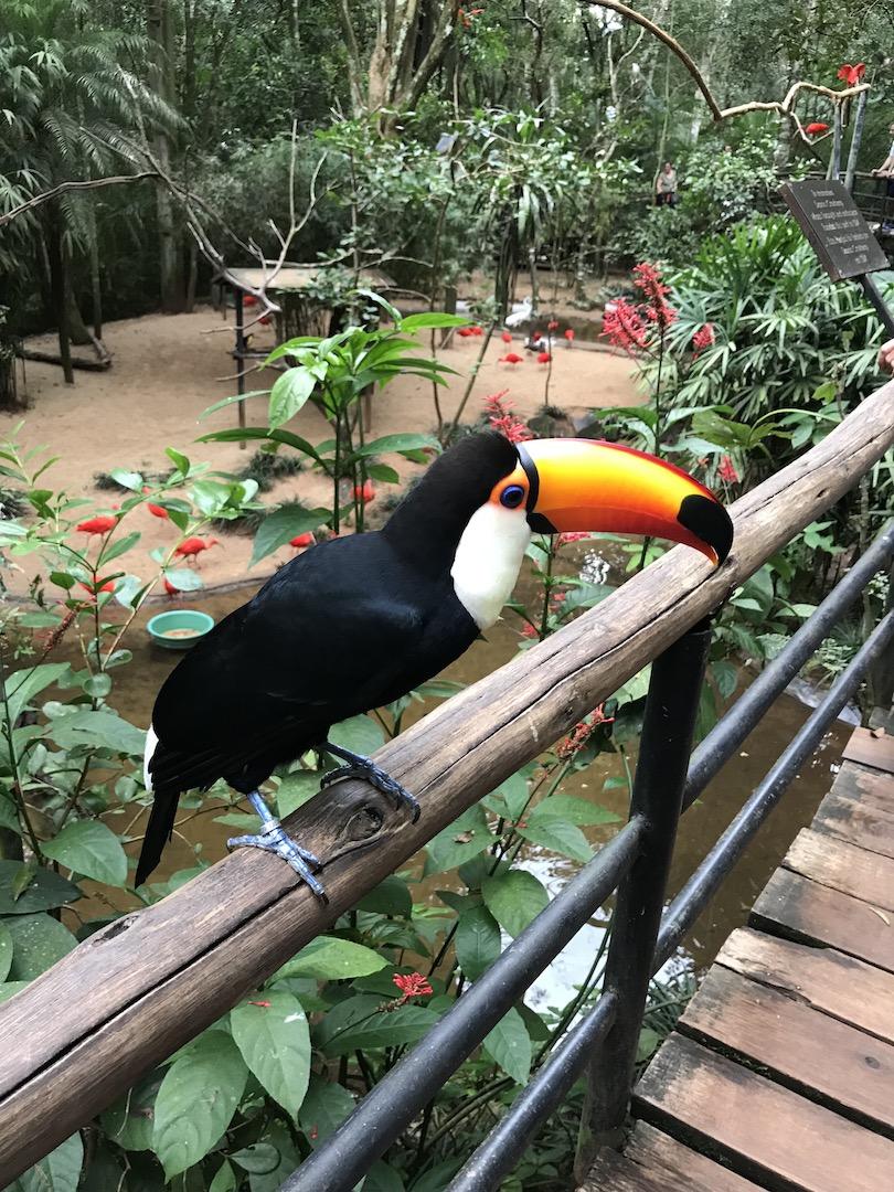 Im Vogelpark, Iguazu, Brasilien
