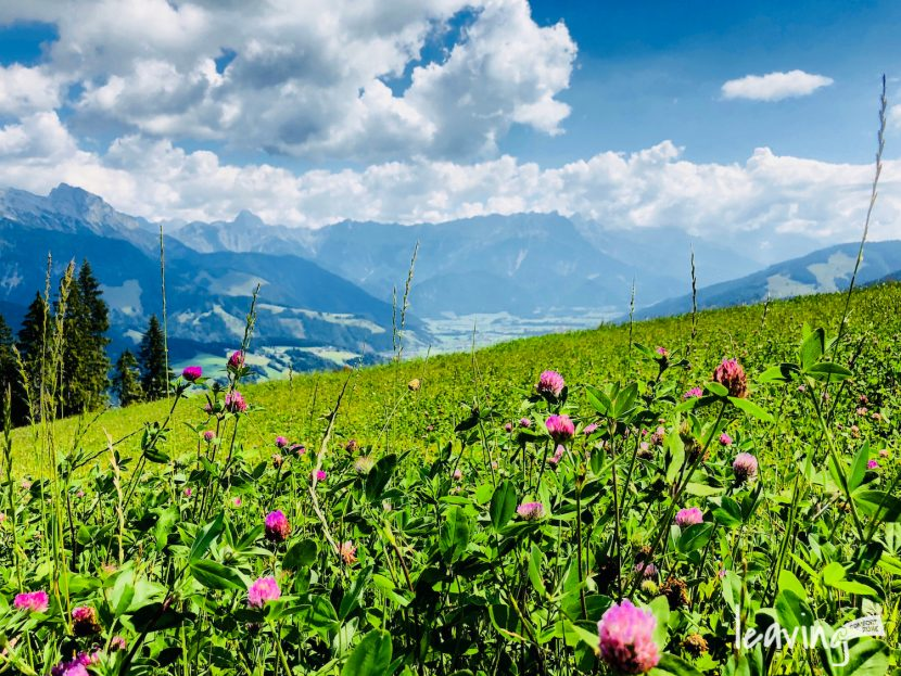 Bergwiese in Tirol