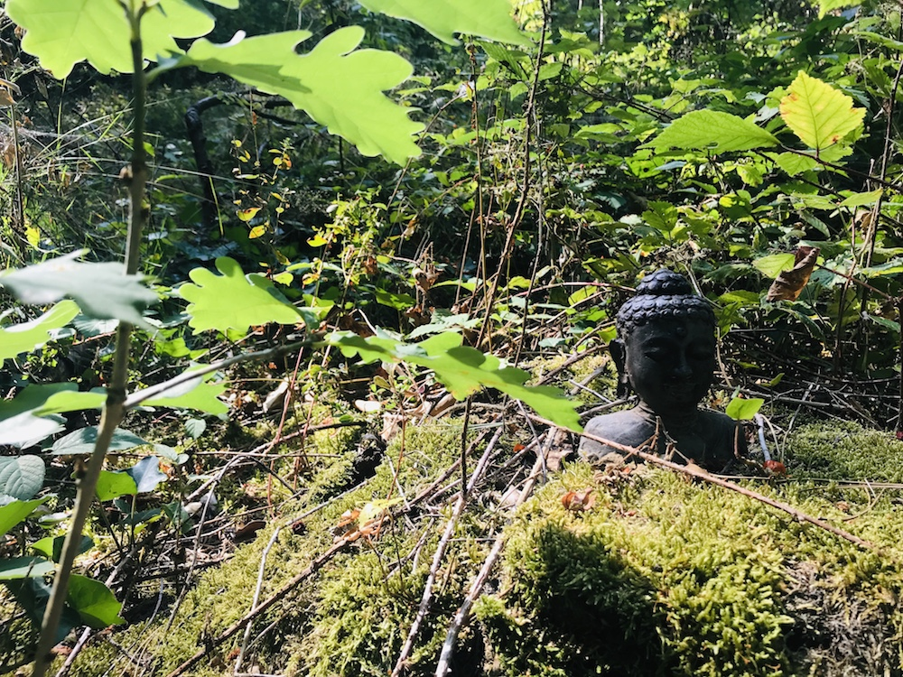 ZEN Wald im Kloster Garten