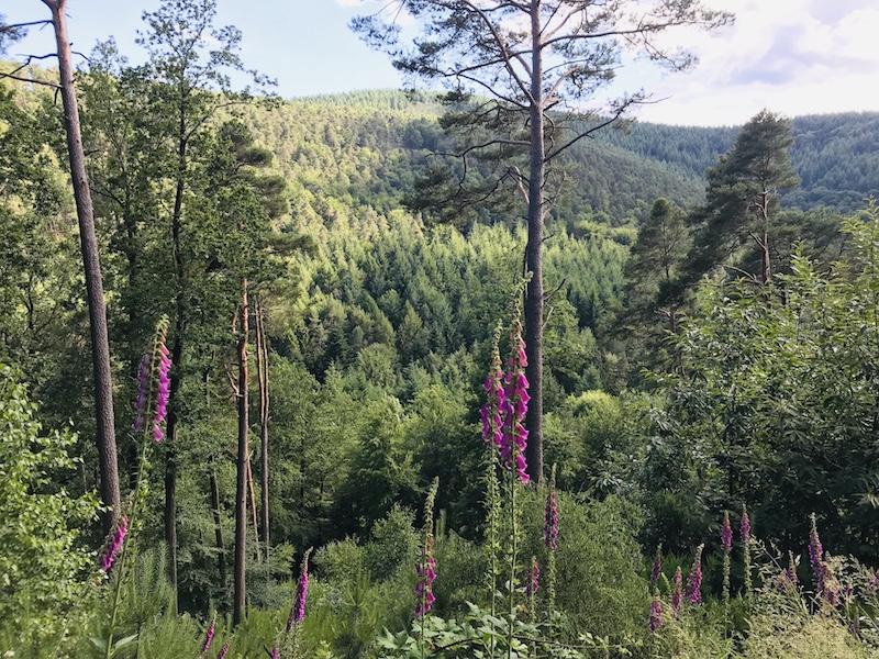 Aussicht Pfälzer Wald