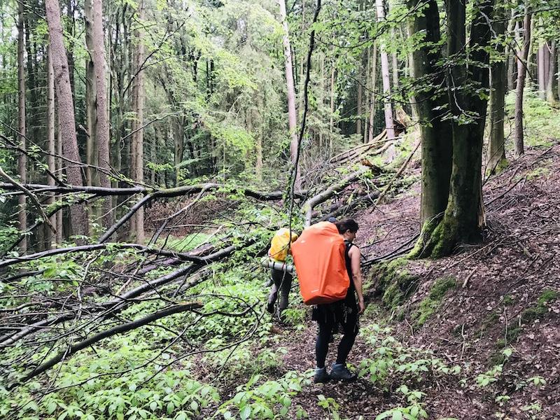 Wald wandern Pfalz