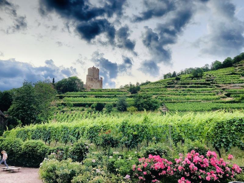 Blick auf die Weinberge hinter Kaysersberg, Elsass