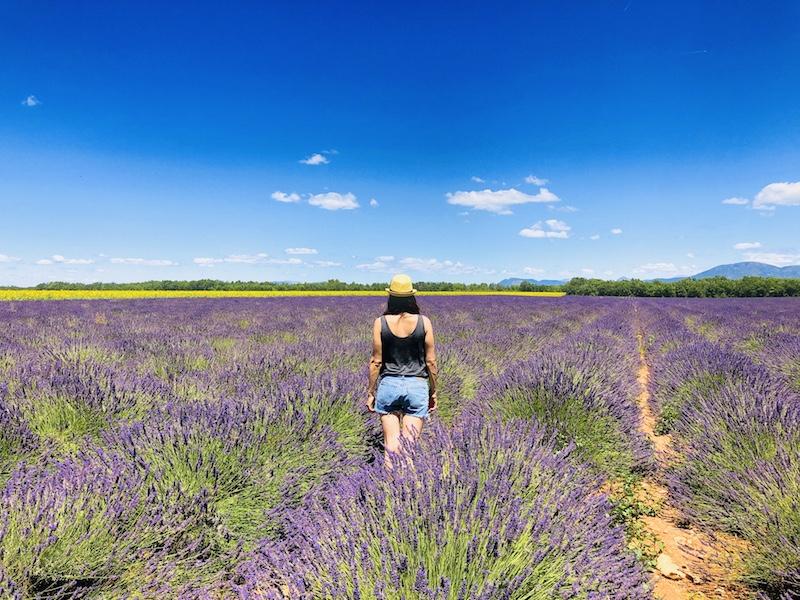 Frau im Lavendelfeld bei Valensole, Provence