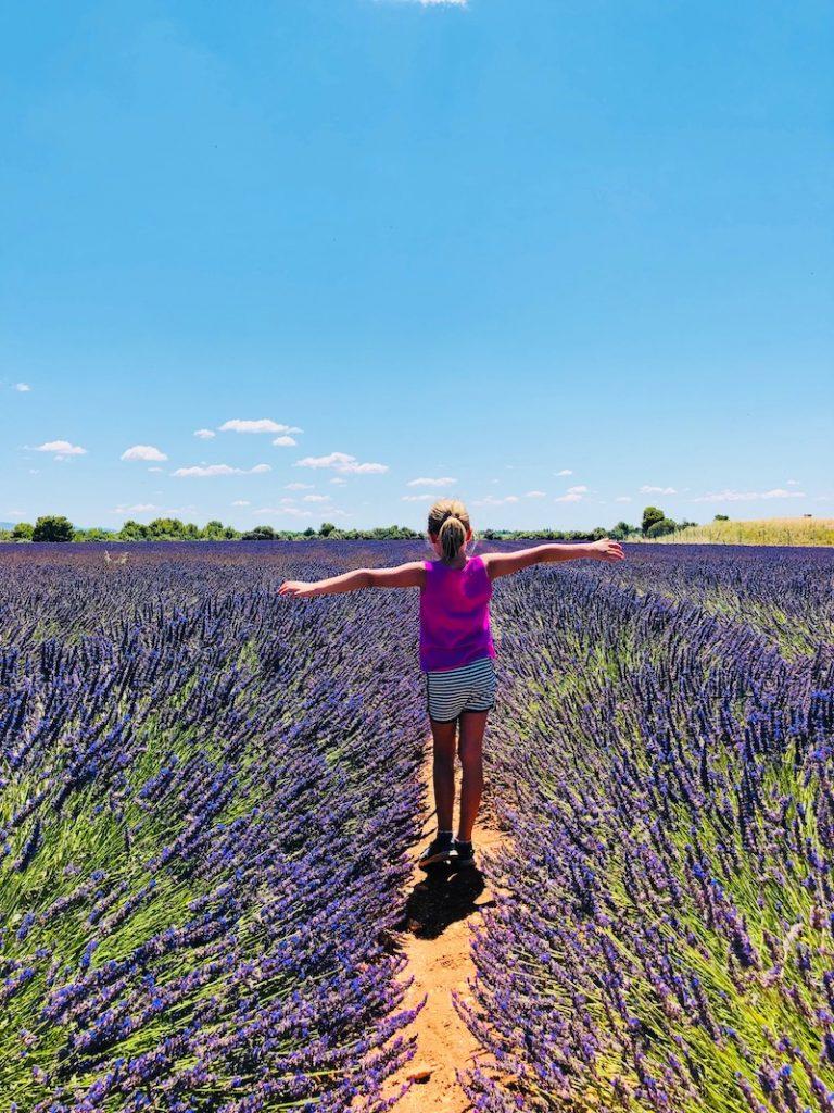 Lavendelfeld Provence bei Valensole