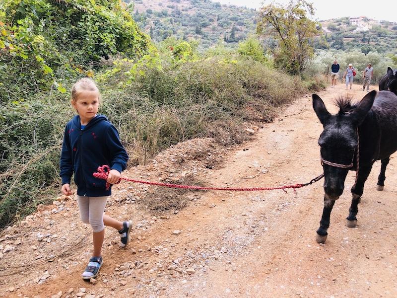 Kräuterwanderung mit eseln in Kournas, Kreta