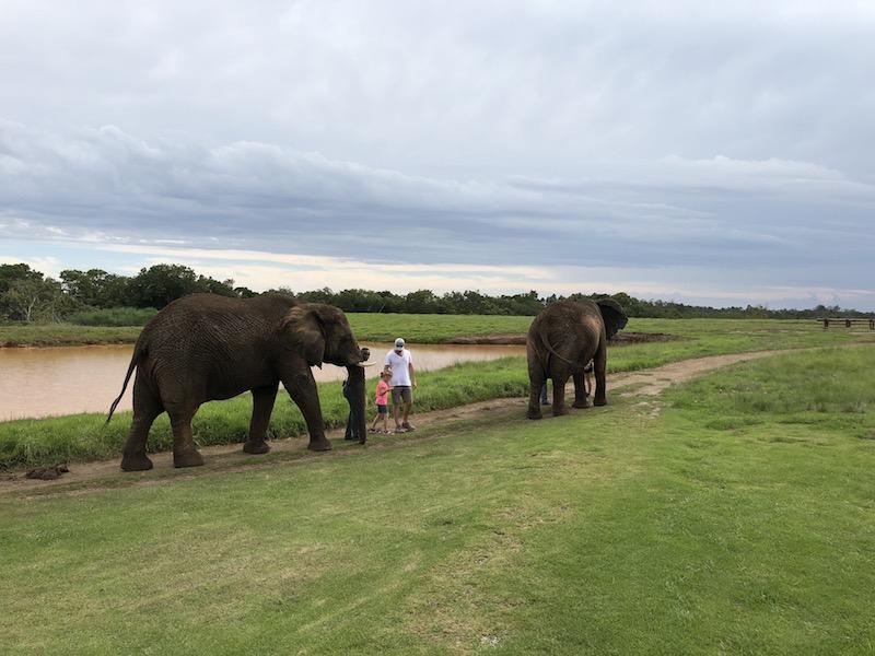 Elefantenspaziergang, Plettenberg