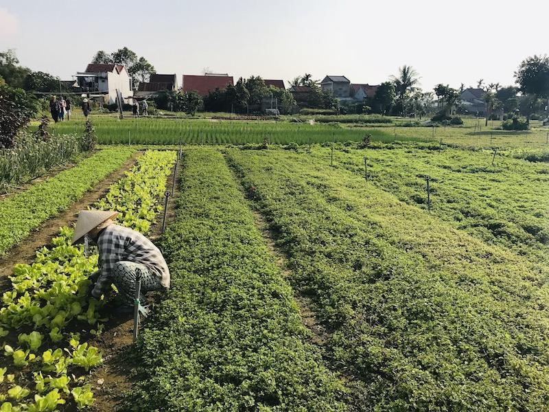 Herb Village in Hoi An