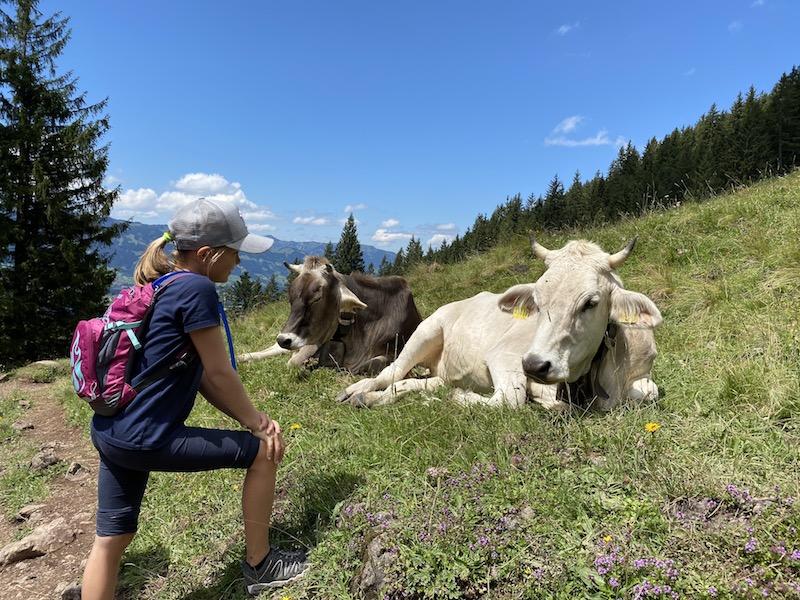 Kühe auf dem Weg zum Unteren Gaisalpsee, Allgäu